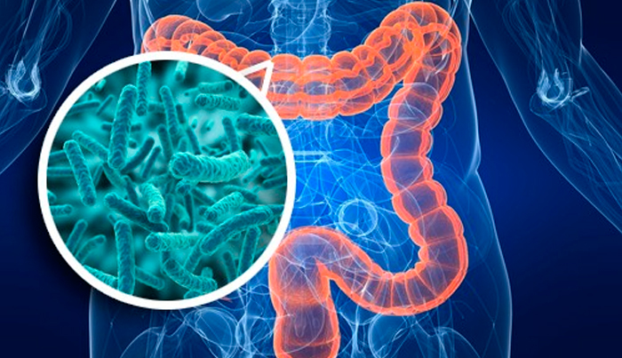 bactérias-intestinais