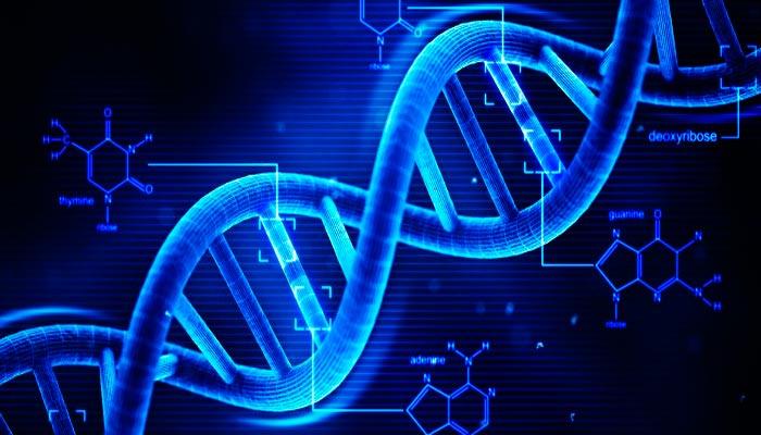 Existem-os-genes-da-obesidade