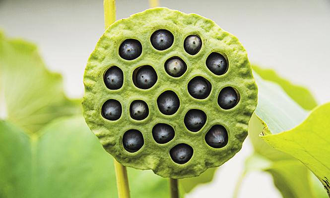 planta exotica com buracos